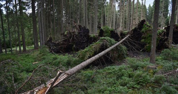 Některé turistické trasy v jižní části Národního parku Šumava zůstávají, po bouřce a silném větru z noci na sobotu 19. srpna, nepřístupné. Jedná se například o úseky Nové Údolí - Třístoličník - Plechý, Schwarzenberský plavební kanál - Plešné jezero - Jelení Vrchy nebo cyklotrasy v okolí Jeleních Vrchů a Stožce. Na snímku z 21. srpna jsou vývraty a polomy u Říjiště.