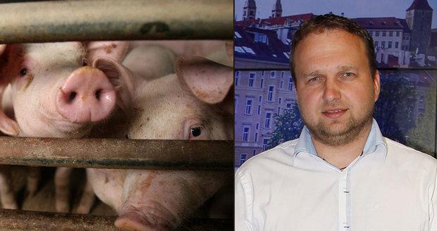 Dopují čeští chovatelé prasata? Maso máme kvalitní a antibiotik méně, hájí se