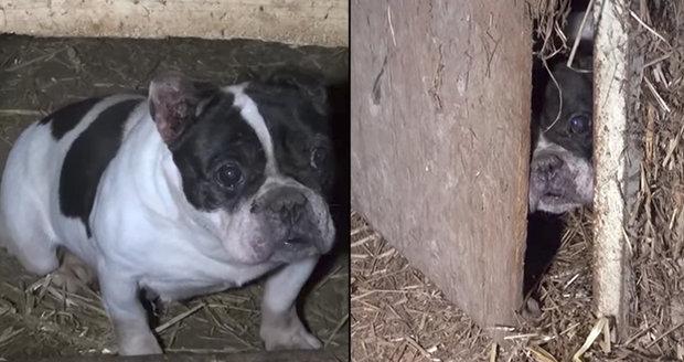 Množírna z Tachovska děsí Čechy: Horší podmínky chovu psů jste neviděli!