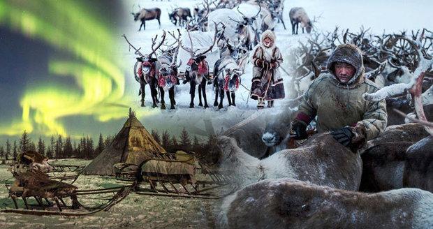 Kmen Něnců přežívá na Sibiři v extrémních teplotách i díky krvi sobů