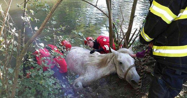 Jihomoravští hasiči zachránili v rozmezí jediného týdne už druhého koně. Tentokrát zapadl do Dyje u Lednice.