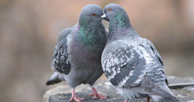 V Dubči se koná výstava nejrůznějších zvířátek, od holubů až po králíky či drůbež. (ilustrační foto)