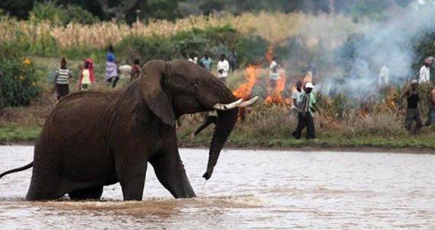 Uprchlíci narušili revír slona. Doplatily na to holčička (†5), děvče (†13) i žena