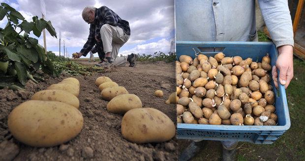 Umíte uskladnit plodiny tak, že přečkají téměř celou zimu bez úhony?
