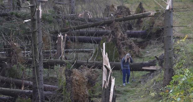 Vichřice poničila státním Lesům ČR asi milion kubíků dřeva. (prosinec 2017)