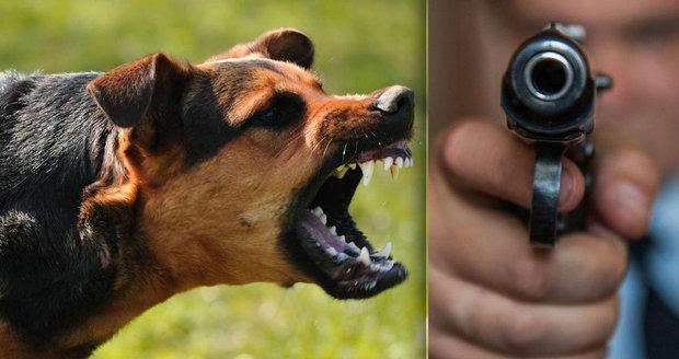 Feťačka řádila v Liberci: Policie nezvládala jejího psa, zastřelili ho