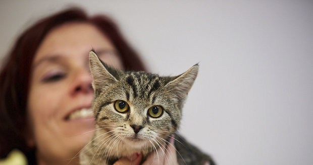 """Kočičí """"tety"""" v sobotu nabídnou mazlíčky z útulků. Prozradí, který se k vám hodí"""