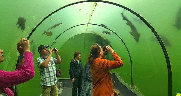 Největší sladkovodní tunel v přírodě nejen u nás, ale i v Evropě můžete po celý rok vidět v Modré u Velehradu. Má příznačný název Živá voda.
