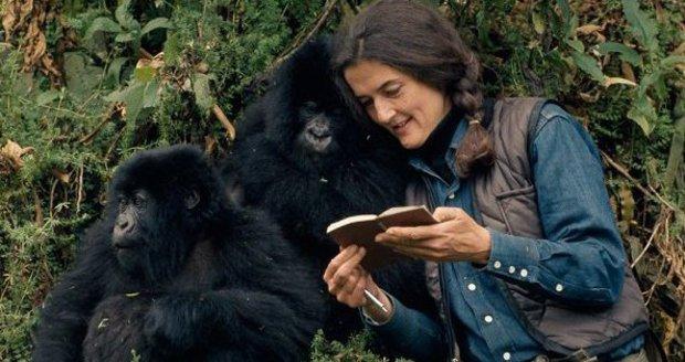 """Záhadná smrt """"matky goril"""" po 32 letech odhalena? Tihle prý vzali na ochránkyni mačetu"""