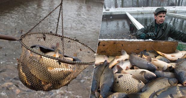 Ryby seznamky webové stránky zdarma