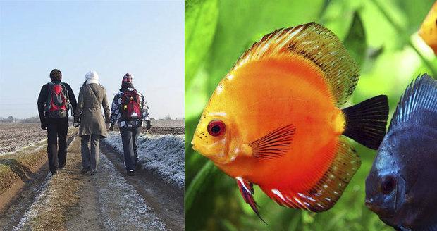 Vydejte se na túru i za rybičkami.