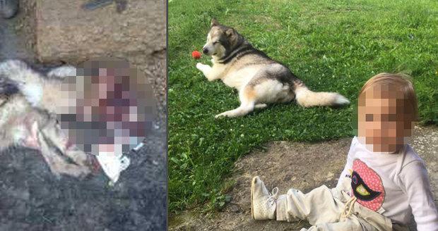 Šokující foto: Psa nám ukradli a snědli! Rodině policisté přinesli už jen kůži