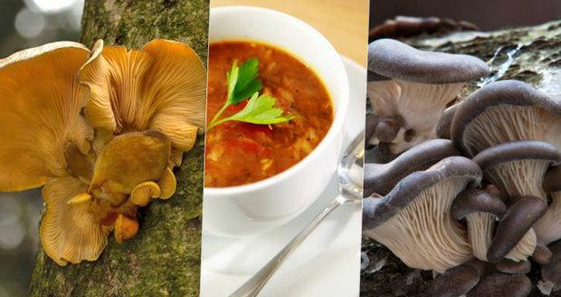 Na houby můžete vyrazit i v zimě! Podívejte se, jaké houby můžete najít v lese pod sněhem