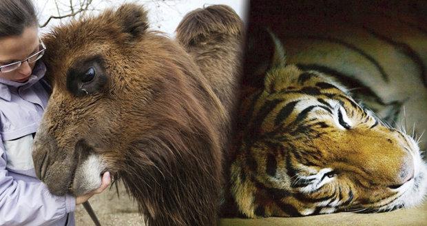 Vydejte se v únoru do zoo.