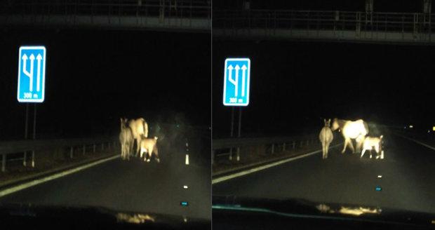 Zvířátka a Petrovští na dálnici: Po komunikaci na Sokolovsku pochodoval osel, koza i kůň