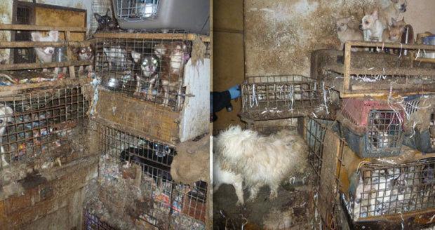 Dům hrůzy na Vysočině: Stovky psů trpěly v klecích plných výkalů, stěny domu byly nasáklé močí