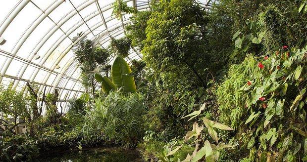 Botanická zahrada chystá svatojánský workshop, vítat se bude léto.