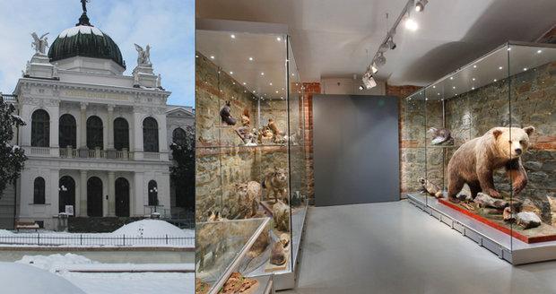 Nejstarší veřejné muzeum v Česku najdete ve Slezsku. Historie tamějšího zemského muzea v Opavě sahá až do roku 1814.