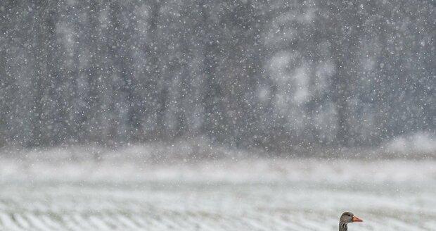 Ochladí se natolik, že na vrcholcích hor bude sněžit nebo budou vypadávat srážky smíšené, tj. deště se sněhem.   (ilustrační foto)