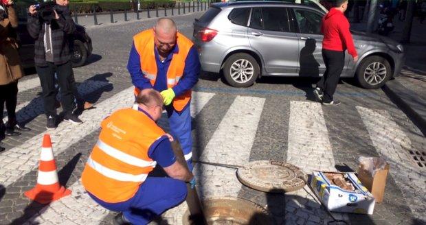 Odborníci Pražanům pod nohy umístí nástrahy na hlodavce o hmotnosti 3,5 tuny.