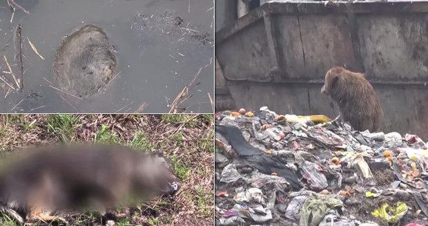 U slovenského města byly nalezeny ostatky uhořelých psů: Mohou za krutou smrt zvířat děti?!