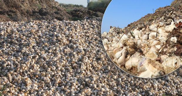 Puch k nevydržení u Slaného: Na pole někdo vyhodil tuny česneku