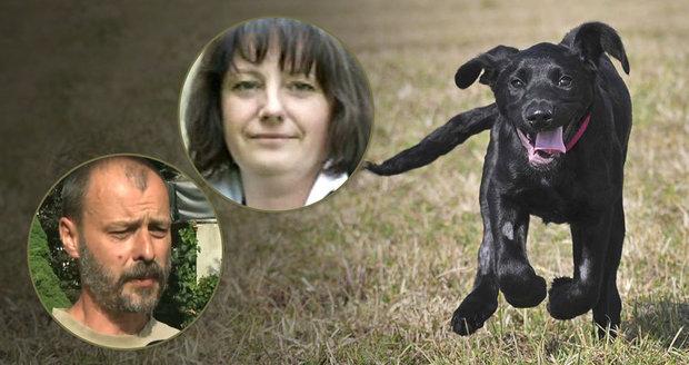 Válka o Marleyho: Odborníci si vjeli do vlasů kvůli operaci týraného štěněte