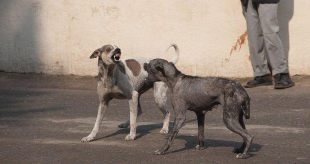 Toulaví psi roztrhali šest dětí. Místní začali vraždit zvířata na potkání