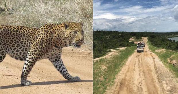 Batole (†3) se zatoulalo na safari: Sežral ho leopard!