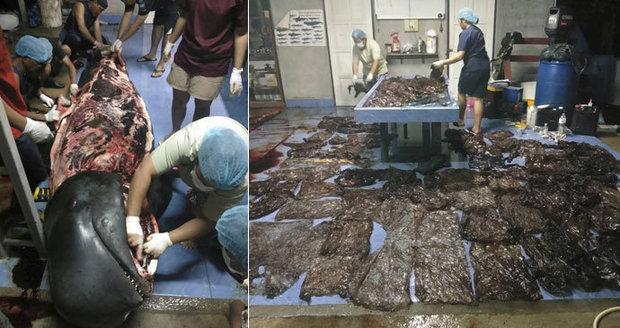 Smutná oběť znečišťování moří: Velrybě z žaludku vytáhli 80 plastových pytlů, zemřela hlady
