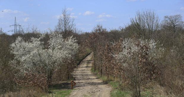 Centrální park na Černém Mostě čeká revitalizace (ilustrační foto).