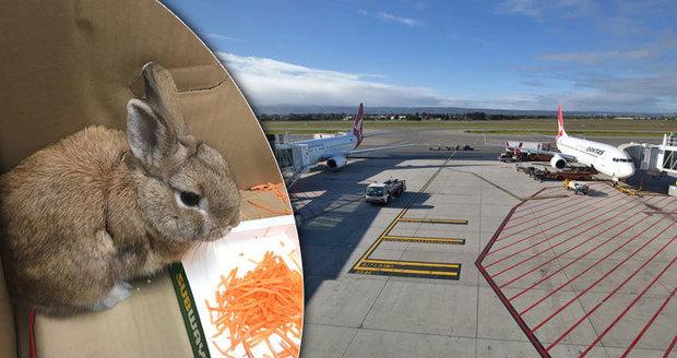 Evakuace letiště kvůli opuštěné tašce: Místo bomby v ní byl králík