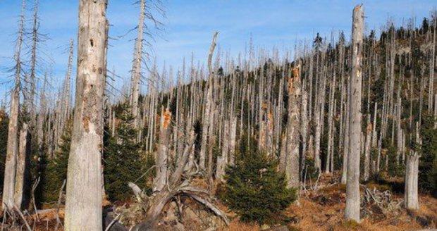 Chybějící les usnadňuje erozi v Čertově rokli. Ilustrační foto