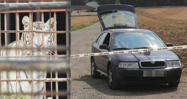 Nelegální obchod s tygry v Berouskově zvěřinci: Policie obvinila tři lidi