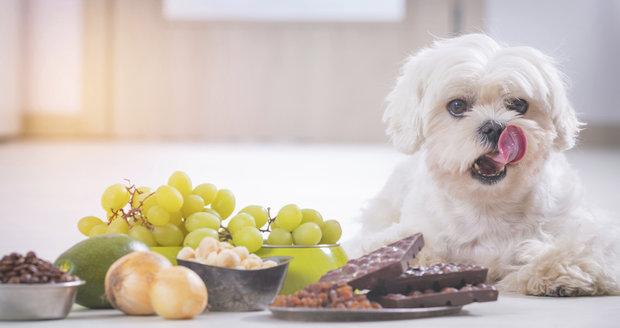 Tyto potraviny jsou pro psy nebezpečné.