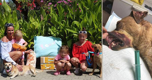 Šťastná zpráva: Týranému psu Ronnymu začal nový život!