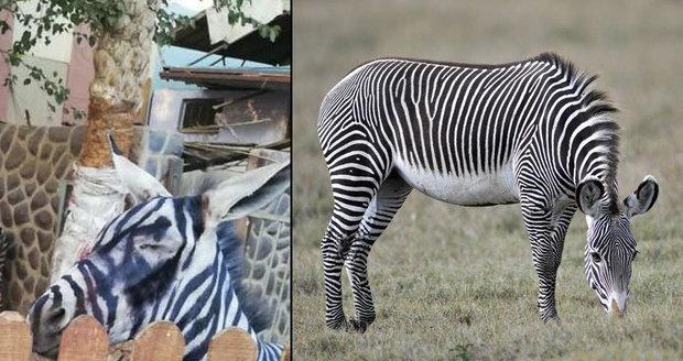 Zoologická zahrada teď může být obviněna za týrání zvířat.