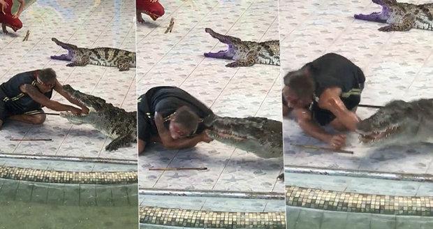 Brutalita před stovkou diváků: Krokodýl zkroutil trenérovi plazů ruku tak, až skoro praskaly kosti