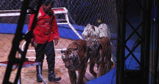 Pouta, jizvy, utrpení. Některé cirkusy v Číně týrají zvířata, návštěvníků stále ubývá