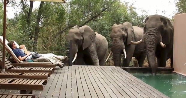 Pár si užíval pohody u bazénu. V tom si tři sloni přišli svlažit chobot