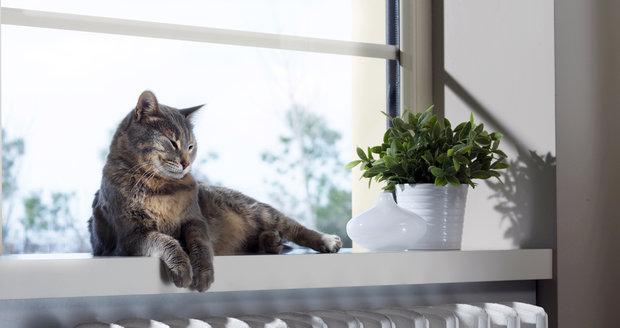 I když kočky snáší teplo mnohem lépe, než psi, v horku se rychle vyčerpají a dehydratují.