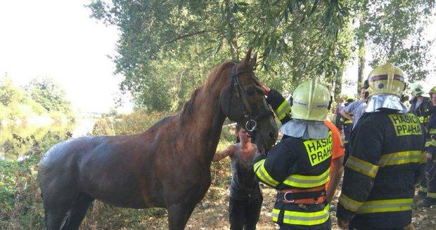 Kůň uvízl po krk v bahně. Do Lipenců ho přijeli zachránit hasiči, odklusal bez zranění