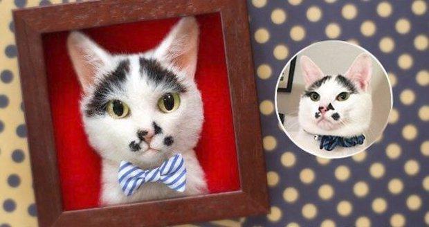 Neuvěřitelně realistické obrázky koček jsou dílem japonské umělkyně, která si říká Wakuneco.