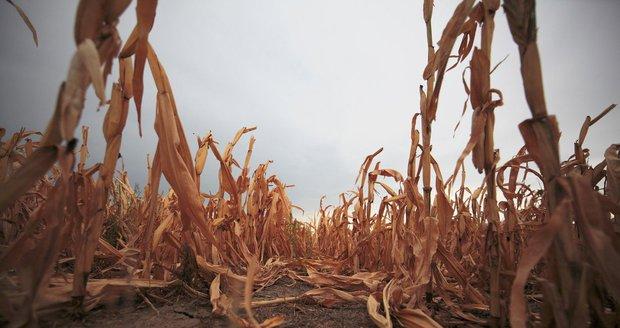 Trápení se suchem a vodou: Zdraží maso i zelenina a hrozí globální konflikt