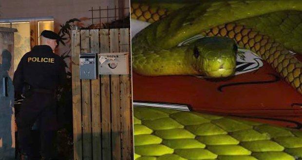 Potvrzeno! Žena, které utekla jedovatá mamba, zemřela na hadí uštknutí