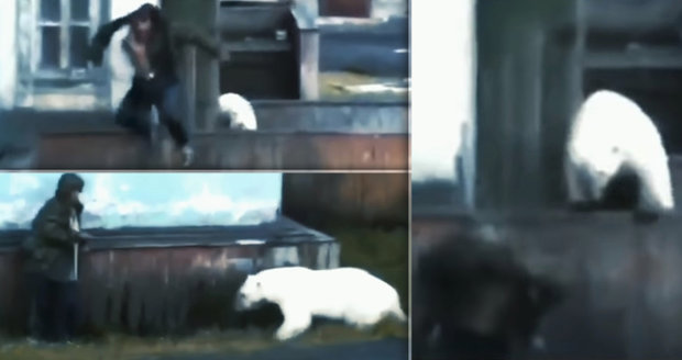 Ruské město v obležení ledních medvědů. Obyvatelé se bojí, že je sežerou