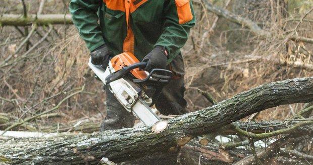 V Břežanském údolí omezuje dopravu odstraňování stromů v havarijním stavu. (Ilustrační foto)