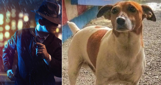 Mafie dá 130 tisíc za psí hlavu. Pocho jí vyčmuchal drogy za miliony