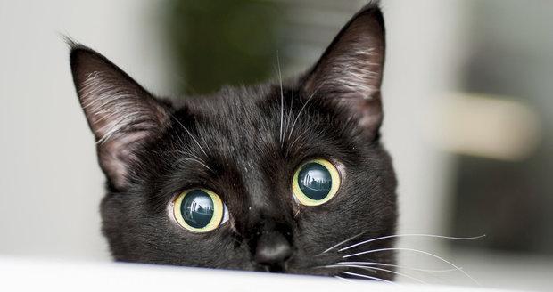 Kočky jsou báječní společníci