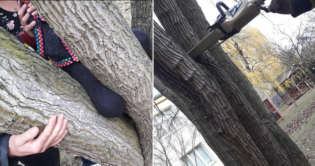 Hasiči vyprostili dívce nohu uvízlou ve stromu.